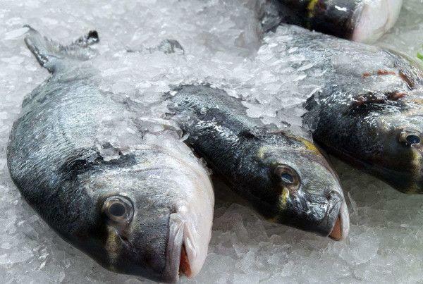 ebizor frozen fish optimized