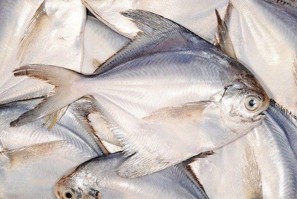 Moonfish pelágicos