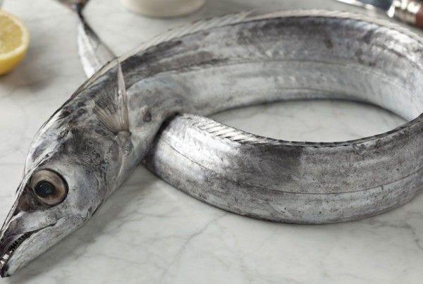 fish ribbonfish pelágicos
